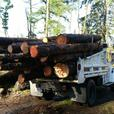 FIREWOOD Sales LOGS Dump Truck Loads, Cords,  Maple Valley 98038 King County WA