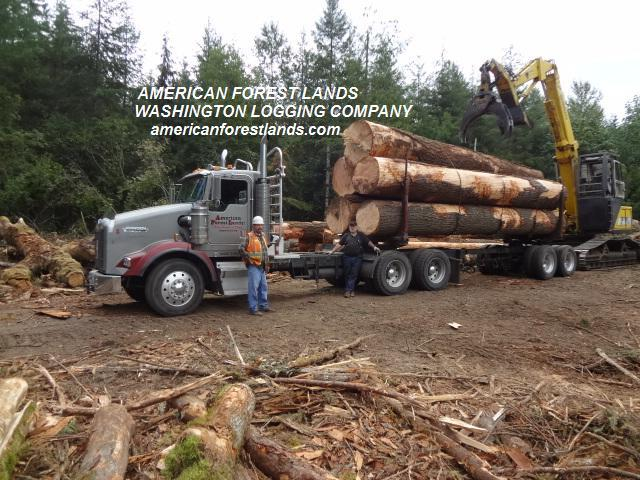 Trucking Jobs Near Me >> TIMBER WANTED, TREES LOGGING Company, TRUCKS Thurston Pierce Lewis County WA Outside Seattle ...