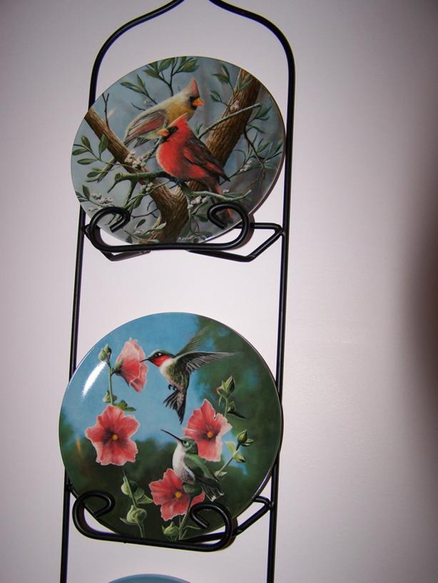 Birds of Your Garden Collection