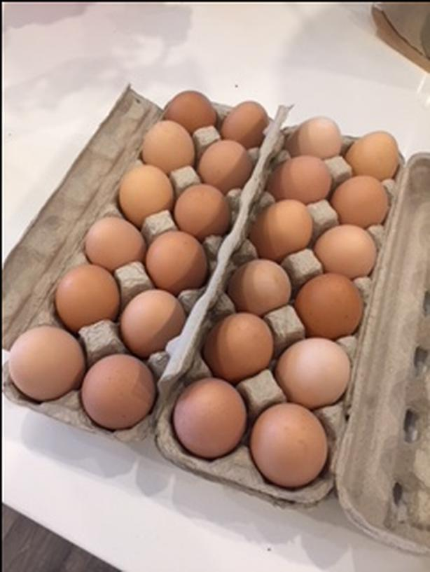 Fresh eggs to your home