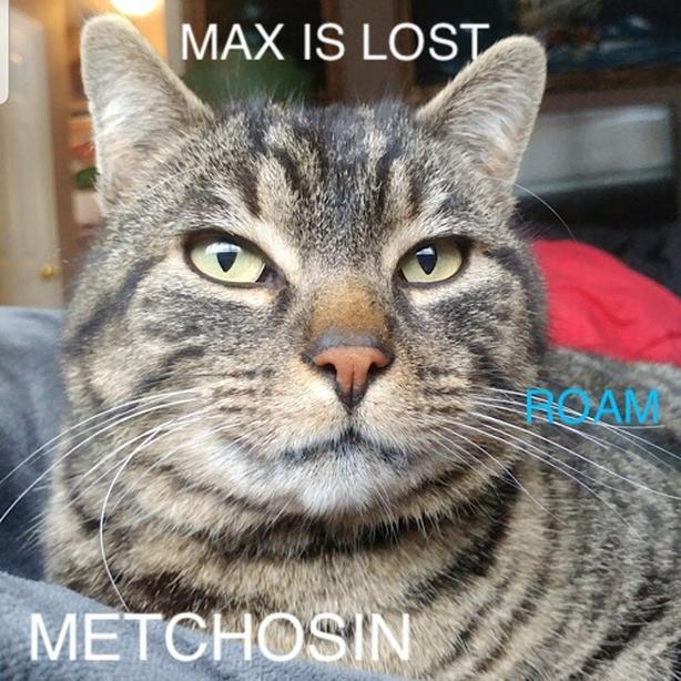 ROAM ALERT ~ LOST CAT 'MAX'
