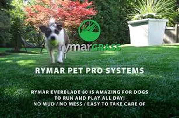 Pet Turf synthetic or natural