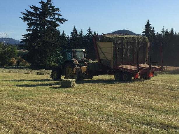 second cut hay