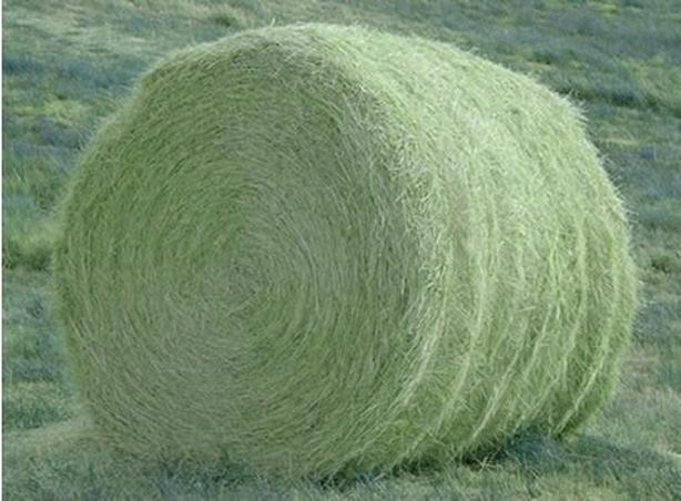 WANTED: Large Round Bales Horse Hay 100+