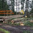 LOGGING SERVICE, Firewood Sales, TIMBER Prices BUYERS WASHINGTON