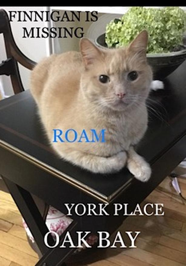 ROAM ALERT ~ LOST CAT 'FINNIGAN'