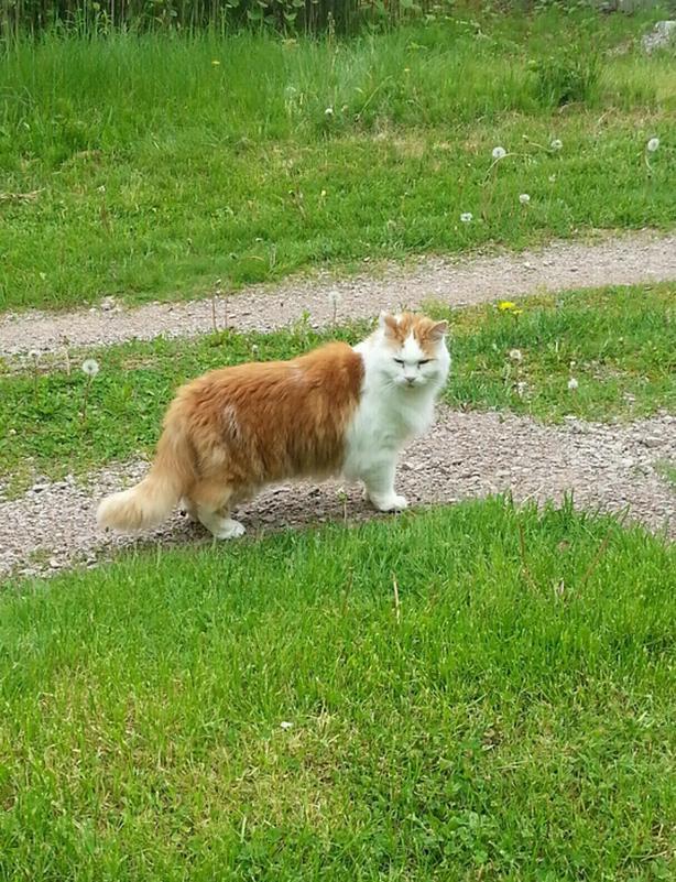 Missing Cat!!
