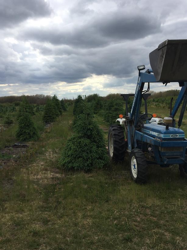 Tree Movers and Tree Farm