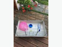 Pet Accessories for Homing in Cowichan, BC - MOBILE