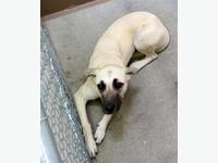 Dogs for Homing in Prince George, BC - MOBILE