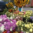Flowers: dahlias and more- by bunch, by bucket, by truckload
