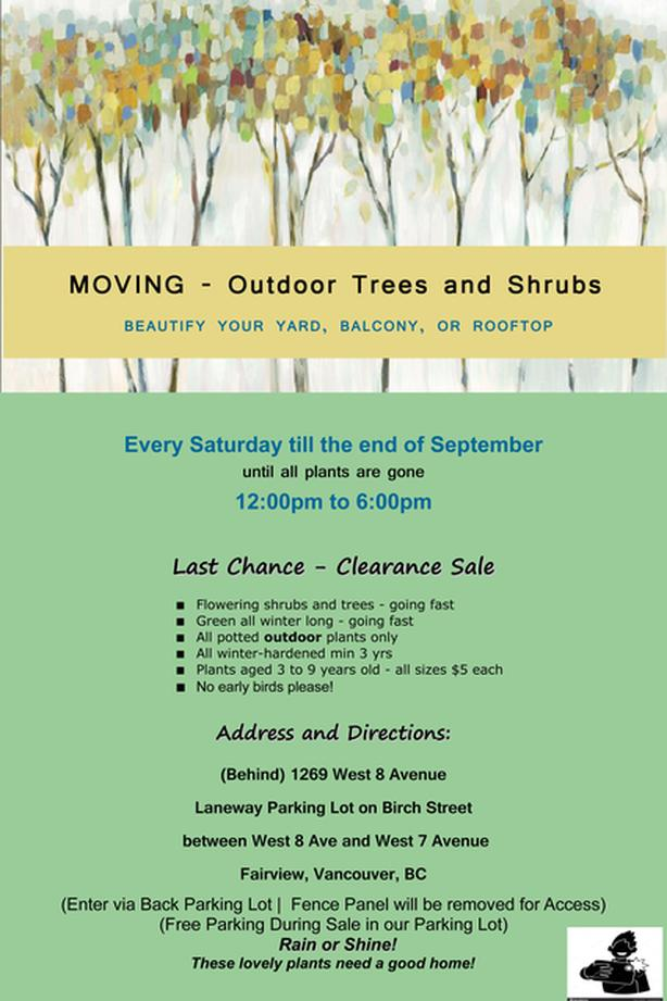 MOVING - Huge Outdoor Potted Tree Shrub Sale