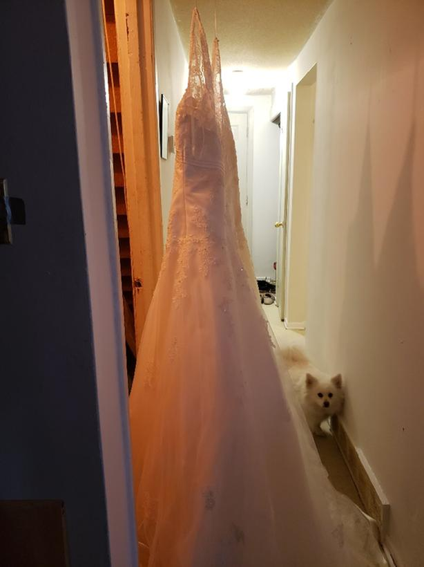 wedding dress size 26 never worn