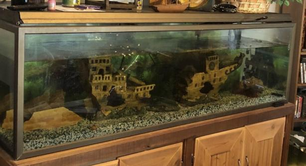 Fish tank 175 gallons 7 feet long