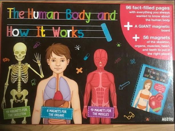 Magnetic set - the Human Body and How it Works