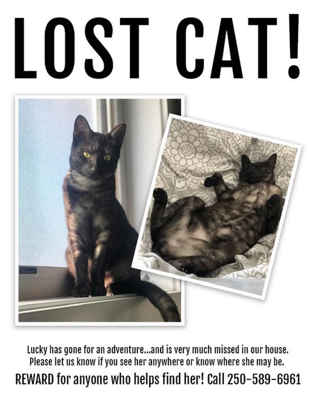LOST CAT! Reward!
