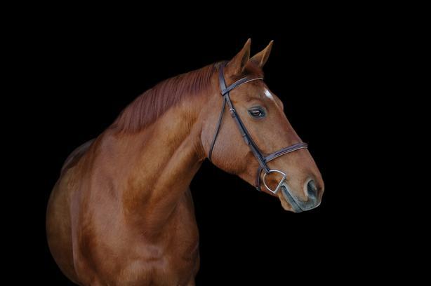 Fun, scopey mare for sale