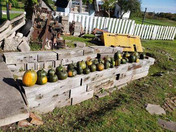 Pumpkins for decorating