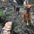 Parkside Pups- Pack hiking/boarding/training
