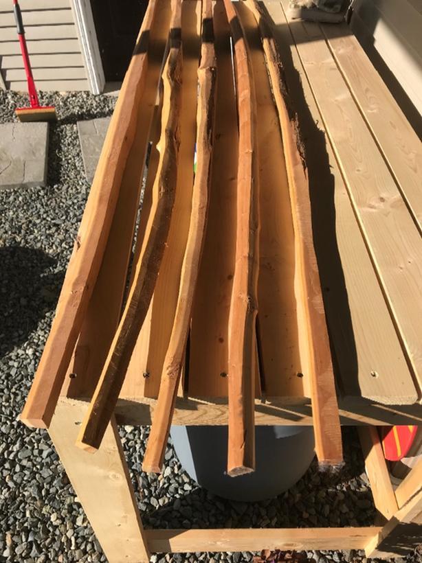 Yew wood longbow staves