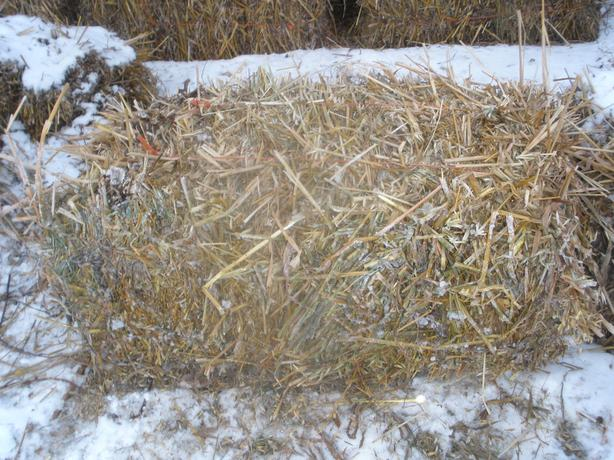 Small square oat bales