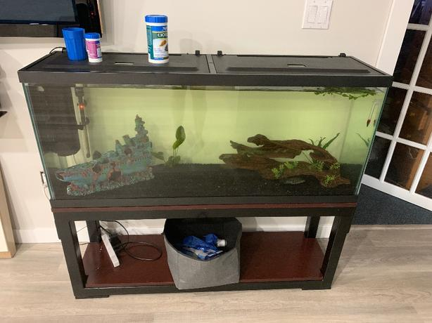 55gal tank with 3 cichlids