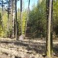 Densely Forested 21+ Acres