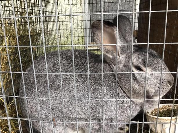 FREE: Rabbits