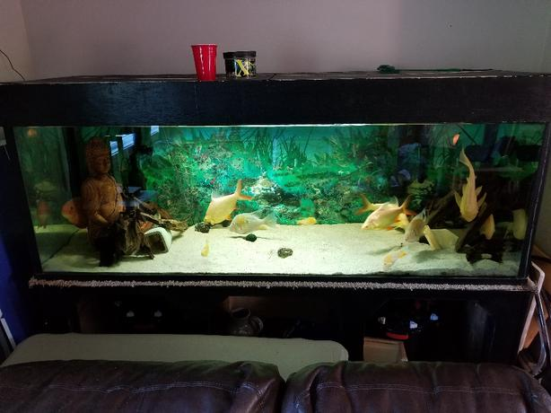 185 gallon tank with stand and hood