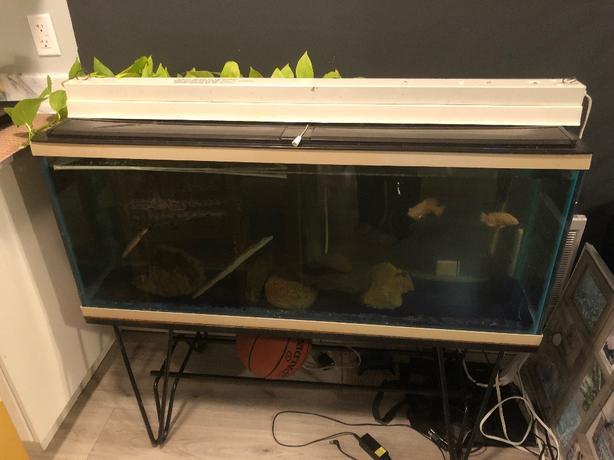 55 Gallon Aquarium + Stand & Lights