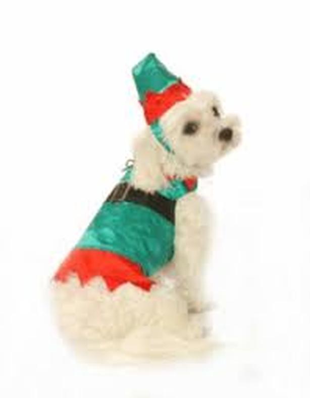 NWT - Doggie Design Elf Harness