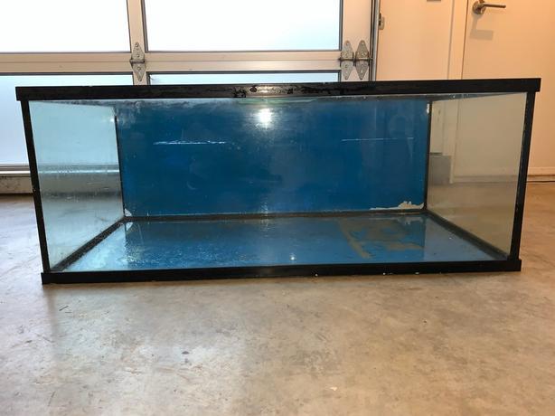90 gallon terrarium/aquarium