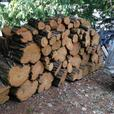 Acacia trunks for woodworking