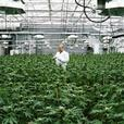 Opportunity: Cannabis Micro-Cultivation Business