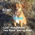 ECHO IS LOST IN NANAIMO