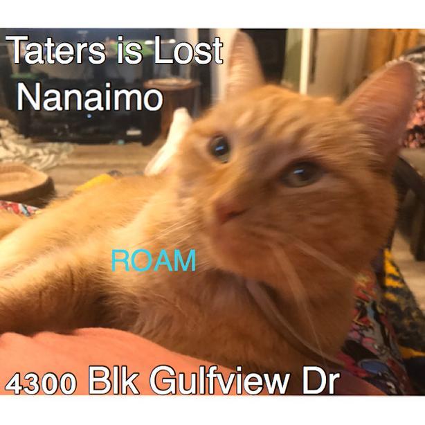ROAM ALERT: LOST CAT TATERS