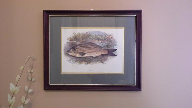 'Carp' by A.F. Lydon Framed Painting Print ( 18 x 22 )