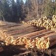 Fir Slabs - Perfect for firewood