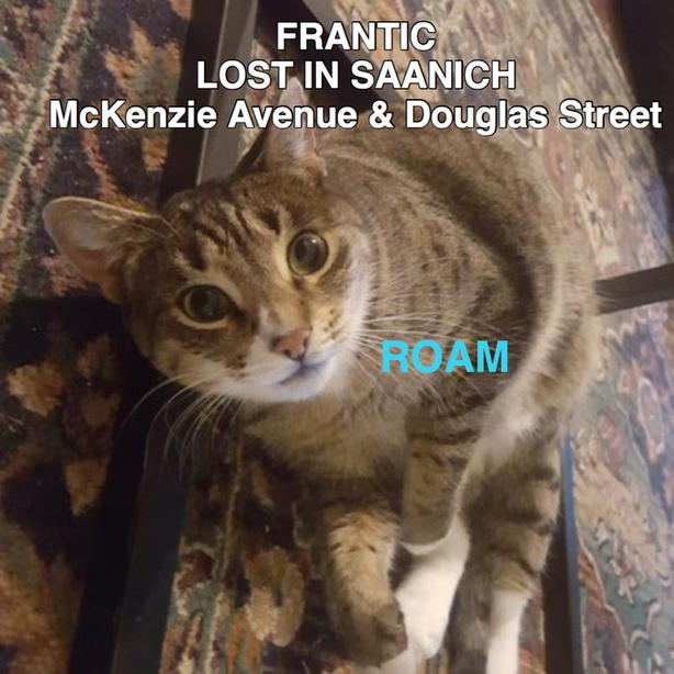 ROAM ALERT ~ LOST CAT 'FRANTIC'