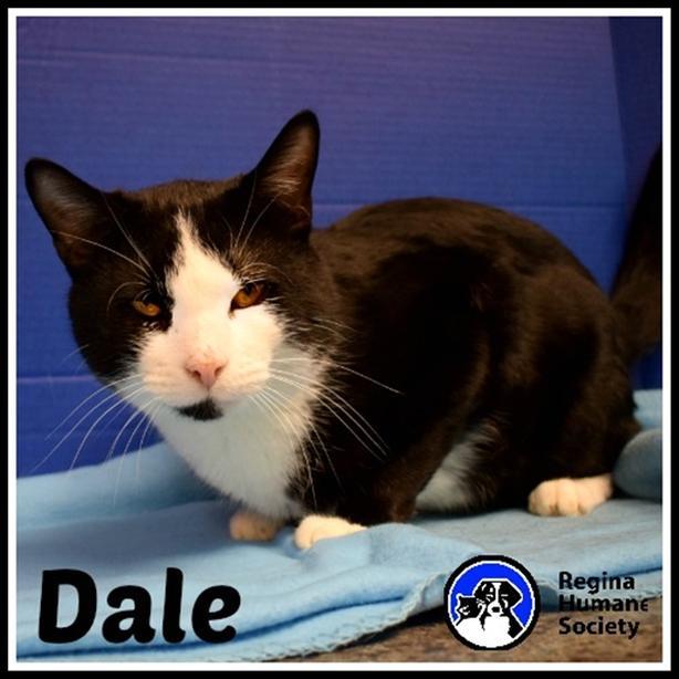Dale* - Domestic Short Hair Cat