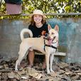 Looking to take your big, active dog hiking and walking!