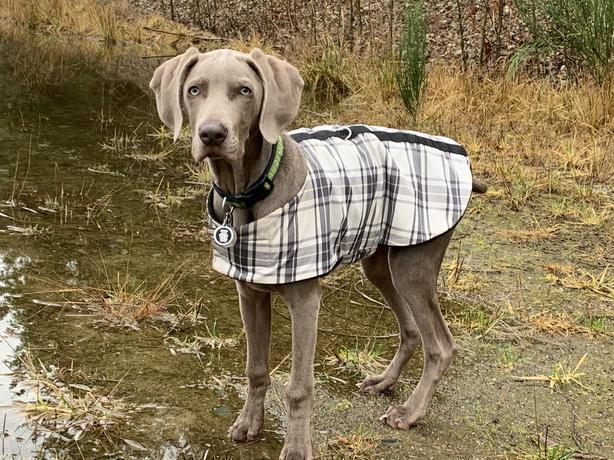 Coolest Rain Jacket Ever...
