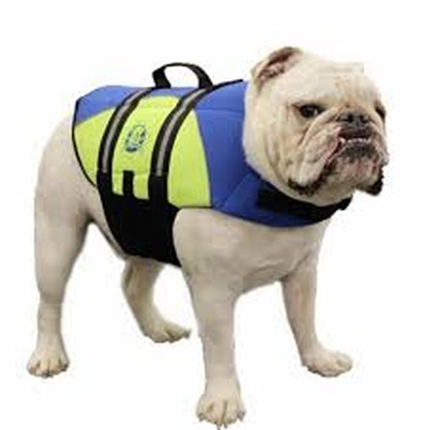 WANTED: Lifejacket for small dog.