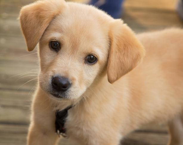 WANTED: Looking to adopt a puppy or young dog