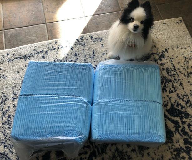 Top Paw® X-Large Dog Pads