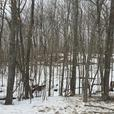 NEW LISTING - OLD SOO ROAD - 29.5 ACRES