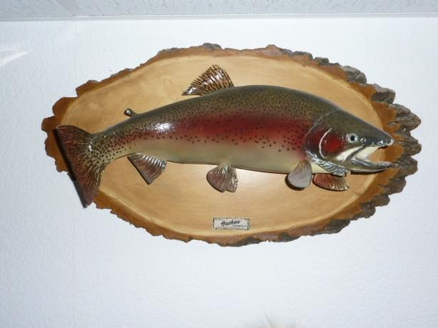 BROOK TROUT WALL MOUNT