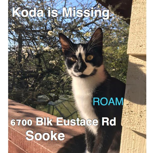 ROAM ALERT ~ LOST CAT 'KODA'