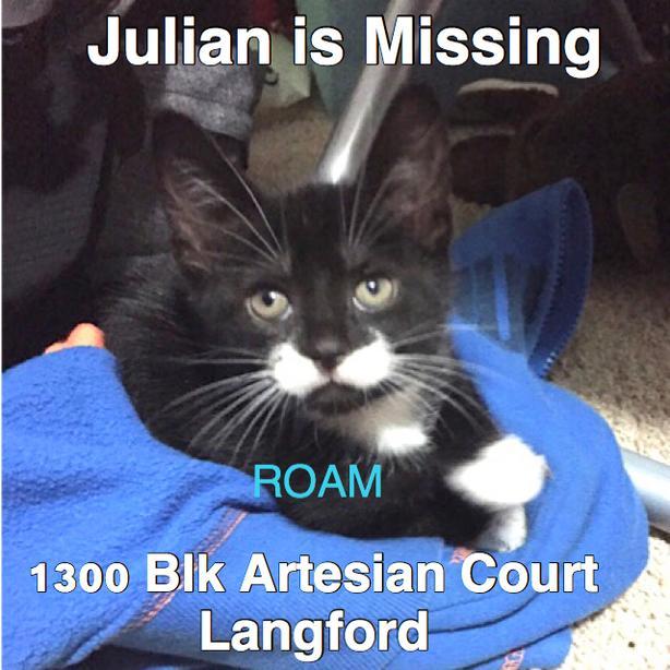 ROAM ALERT ~ LOST CAT 'JULIAN'