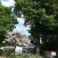 Lincoln Fields/ Britannia Park 3 bedroom Apartment For Rent